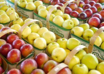 لماذا يتوفر التفاح والموز والفواكه الموسمية طيلة السنة؟