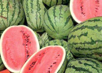 سبب انهيار أسعار البطيخ أو الدلاح في المغرب