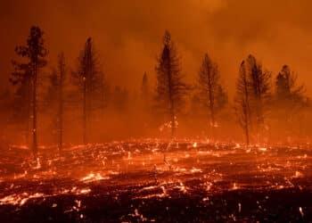 حرائق-الغابات-المتزايدة-عالميا-ونظرية-المؤامرة