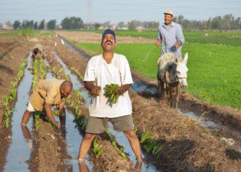 معجزة الزراعة في مصر وما لا يخبرك به الإعلام المضلل